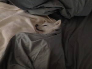 Tucked herself right into OUR bed